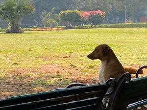 Image 10-A canine enjoying a relaxed afternoon at Jogger's park