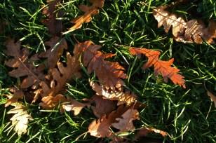 Autumn leaves, 2012