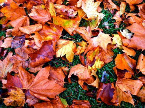 Autumn leaves, 2011