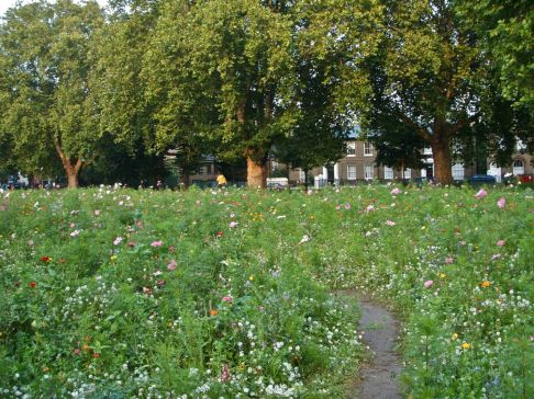 Wildflower meadow London Fields