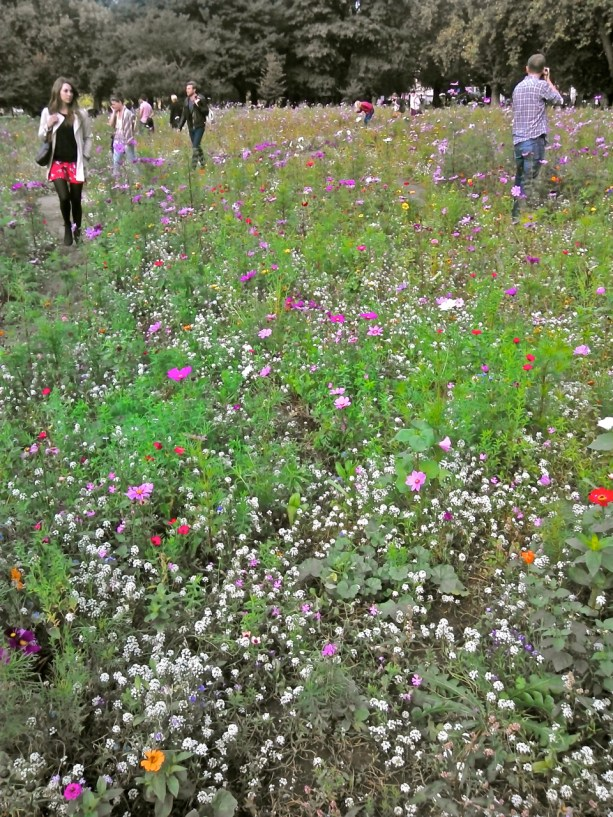 Wildflower meadow, London Fields