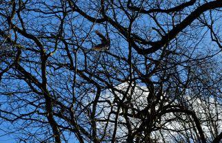Highgate Woods, London