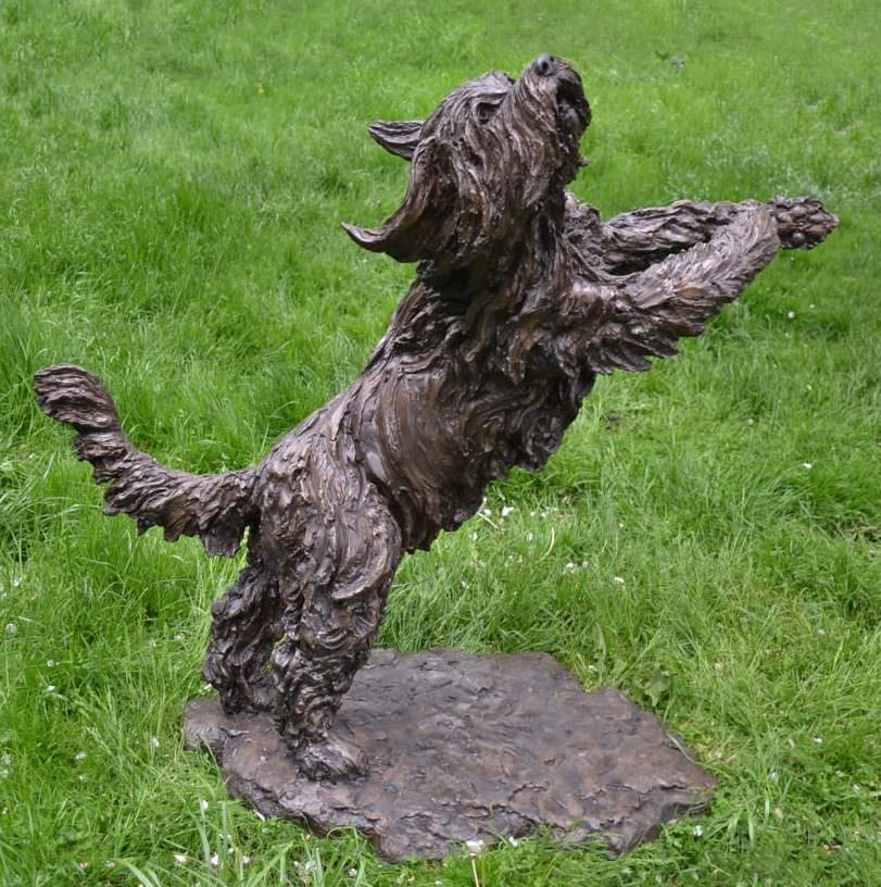 Playing Bearded Collie