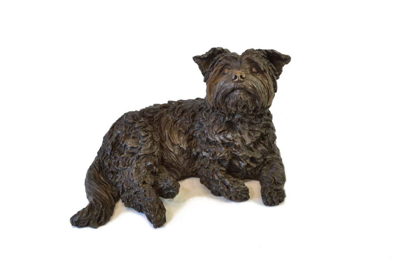 Lying Yorkshire Terrier