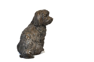 Maltese Terrier right view