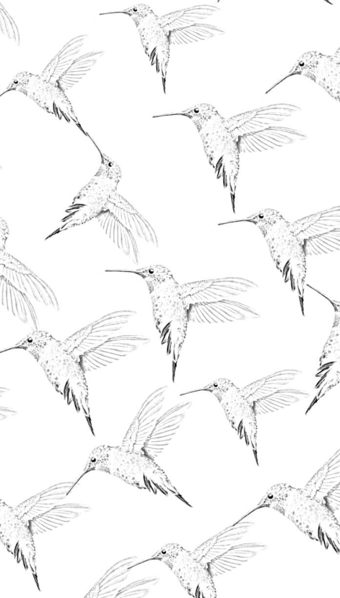 Hummingbird coloring sheet