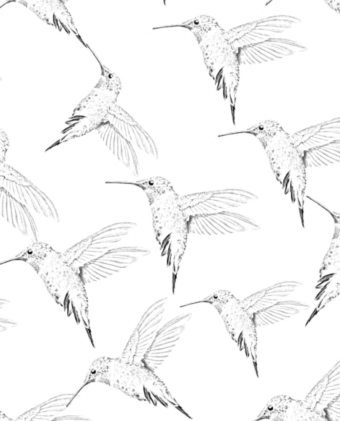 Hummingbird coloring sheet