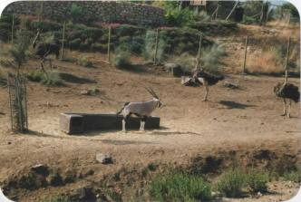 Hol 2000 - SPAIN (20)a