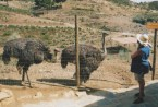Hol 2000 - SPAIN (22a)