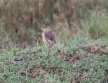 Day 1 Serengeti (500)