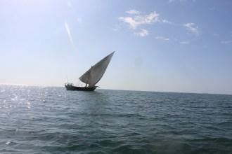 Zanzibar (1166)