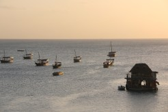 Zanzibar (2488)