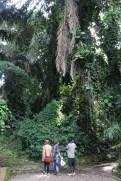 10b Entebbe Gardens (101)