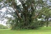 10b Entebbe Gardens (3)