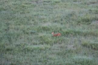 18-20 serengeti (285)