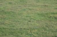 18-20 serengeti (336)