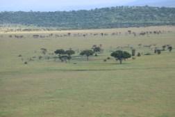 18-20 serengeti (348)