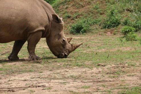 10 Entebbe Zoo (159)