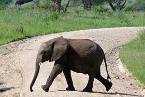 ספארי לשמורות הטבע הפראיות בדרום טנזניה