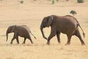 טיול מאורגן לטנזניה וזנזיבר בסוכות