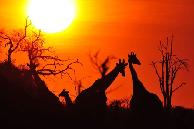 10-day-safari-across-serengeti-and-ngorongoro-crater