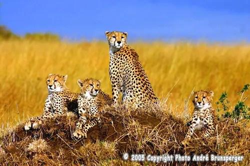 safari photos accompagné par un photographe pro