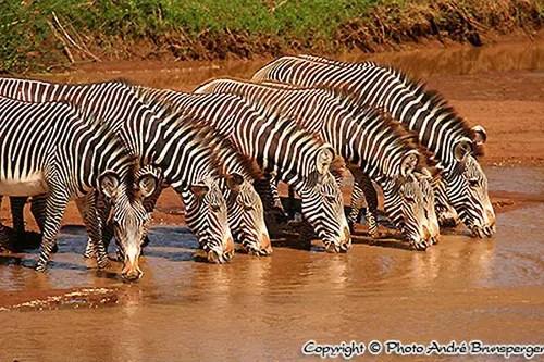 Zèbres Serengeti Tanzanie. c'est comment un bon safari en Tanzanie ?