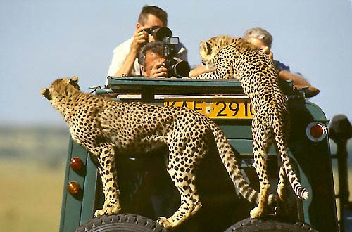 Serengeti Tanzanie