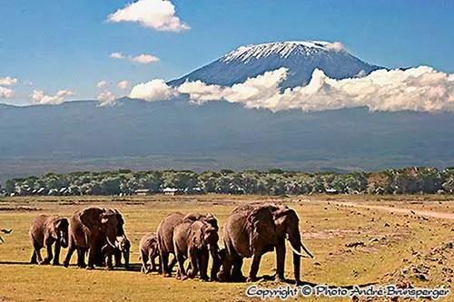 Eléphants Kilimanjaro