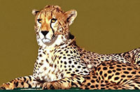 Voyage, safari en Tanzanie