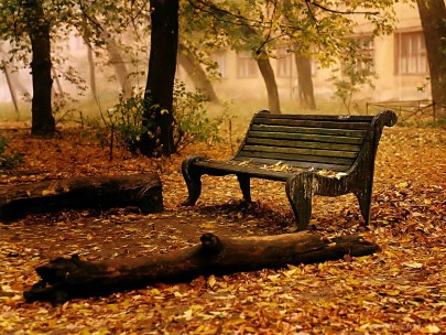 fall leaves and empty bench