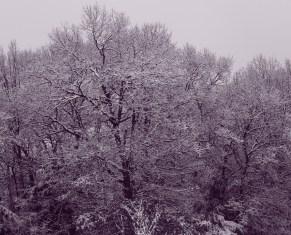 Winter wonderland again 0005