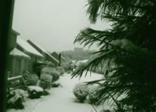 Winter wonderland again 0008