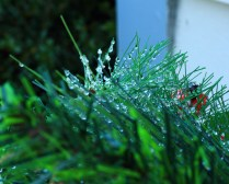 Droplets 0012