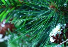 Droplets 0018