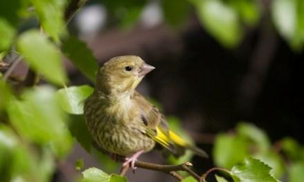 Von der Liebe zu den Vögeln