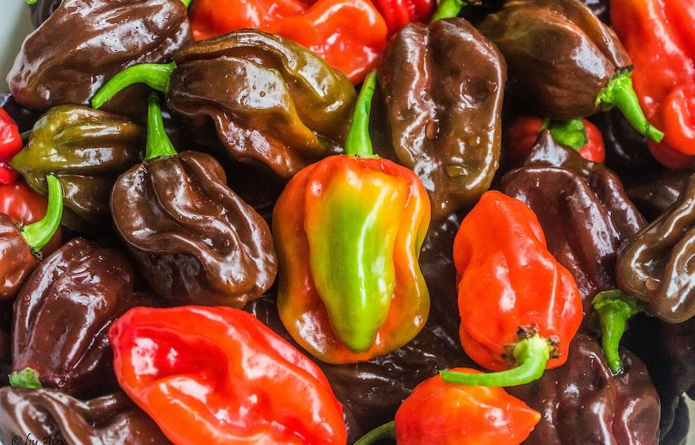 Pflanzenmagie: Chili (Capsicum)