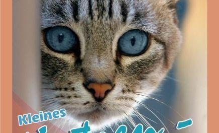 Kleines Katzen Survival Kit