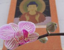 What is Tao Sangha?