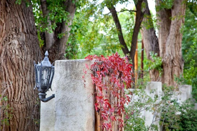 Palacio-de-Marquesa-Taos-New-Mexico-038-Outside-Tree-Lamp-Leaves