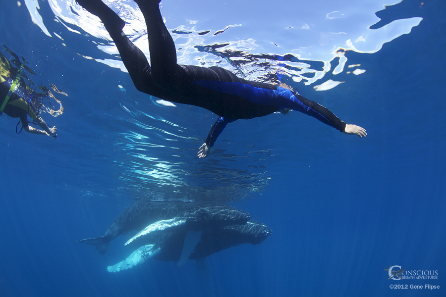 Whales in Dominican Republic