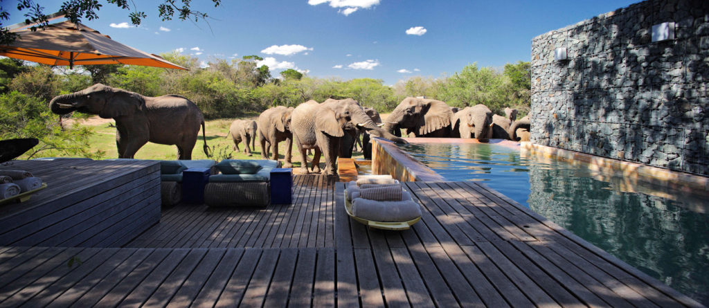 dream holiday in south africa