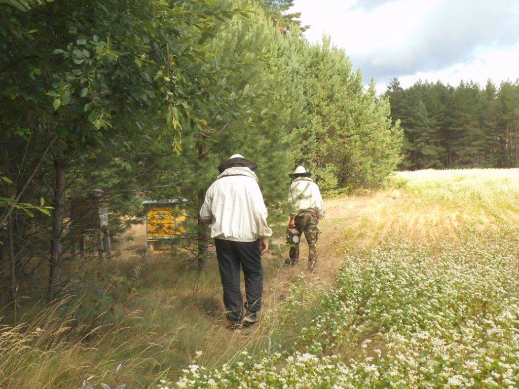Beekeeping in Lithuania