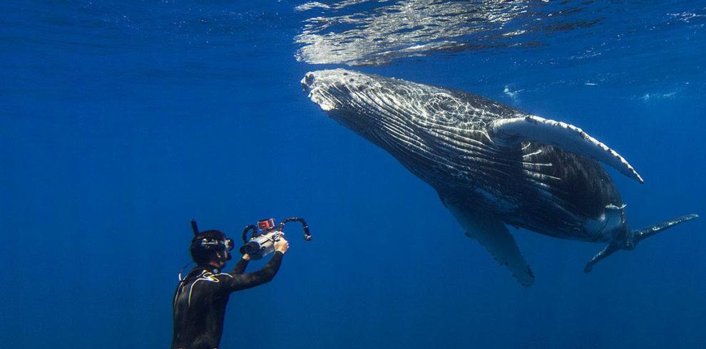 Enjoy A Magical Humpback Whale Encounter In Tonga Best