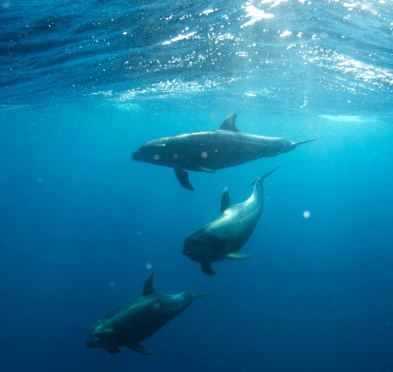 Swim with dolphins in Hawaii Luxury