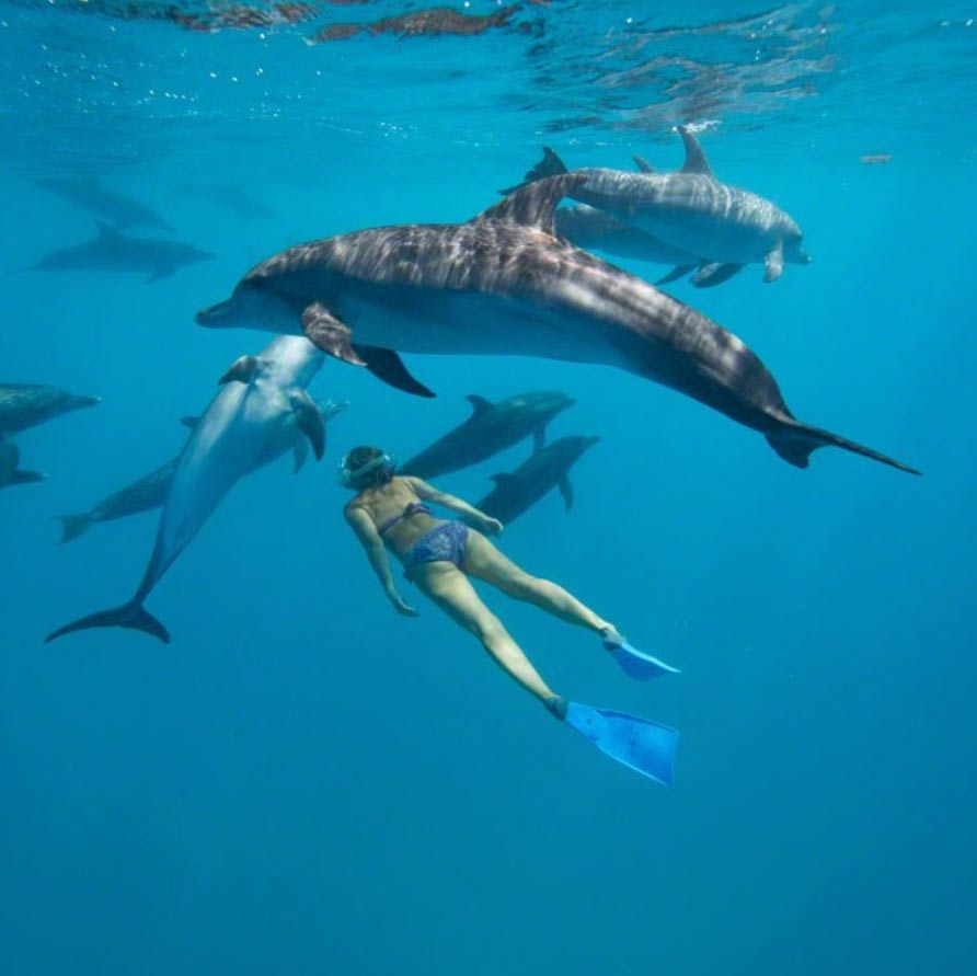 Swim with wild dolphins in bimini