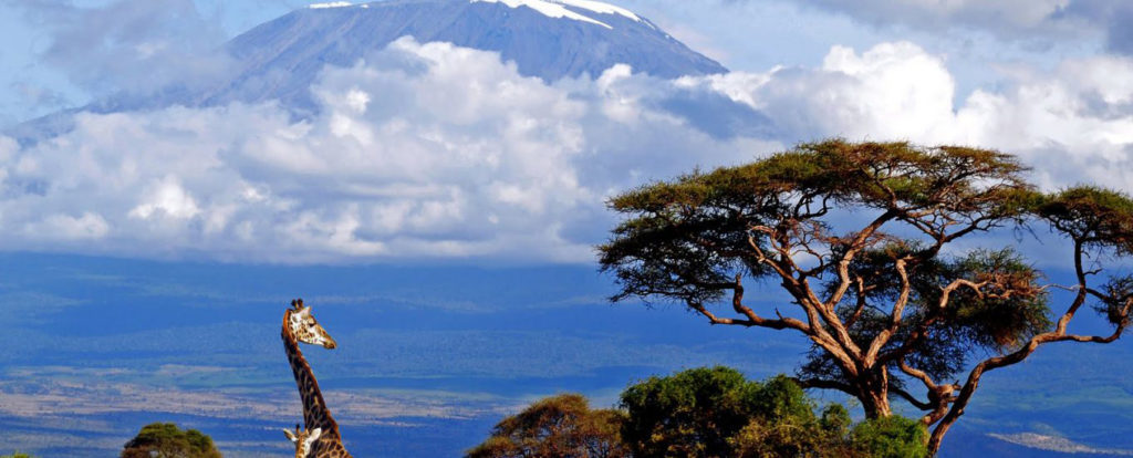 hiking-on-mount-kilimanjaro