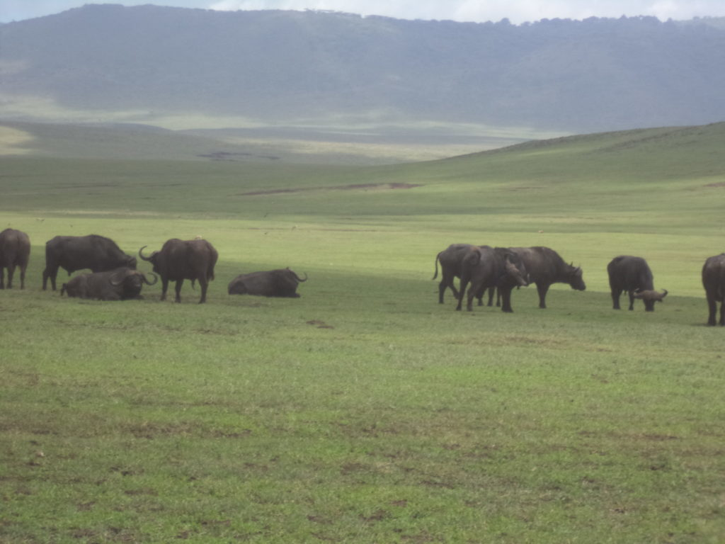 Best Tanzania Safari Tour