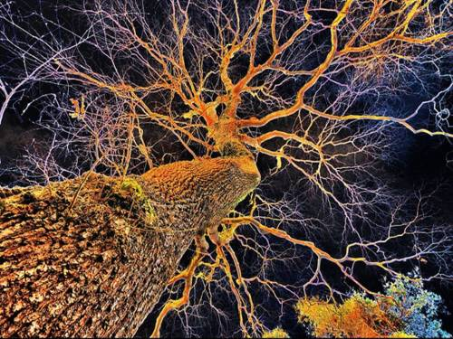 neurons and trees