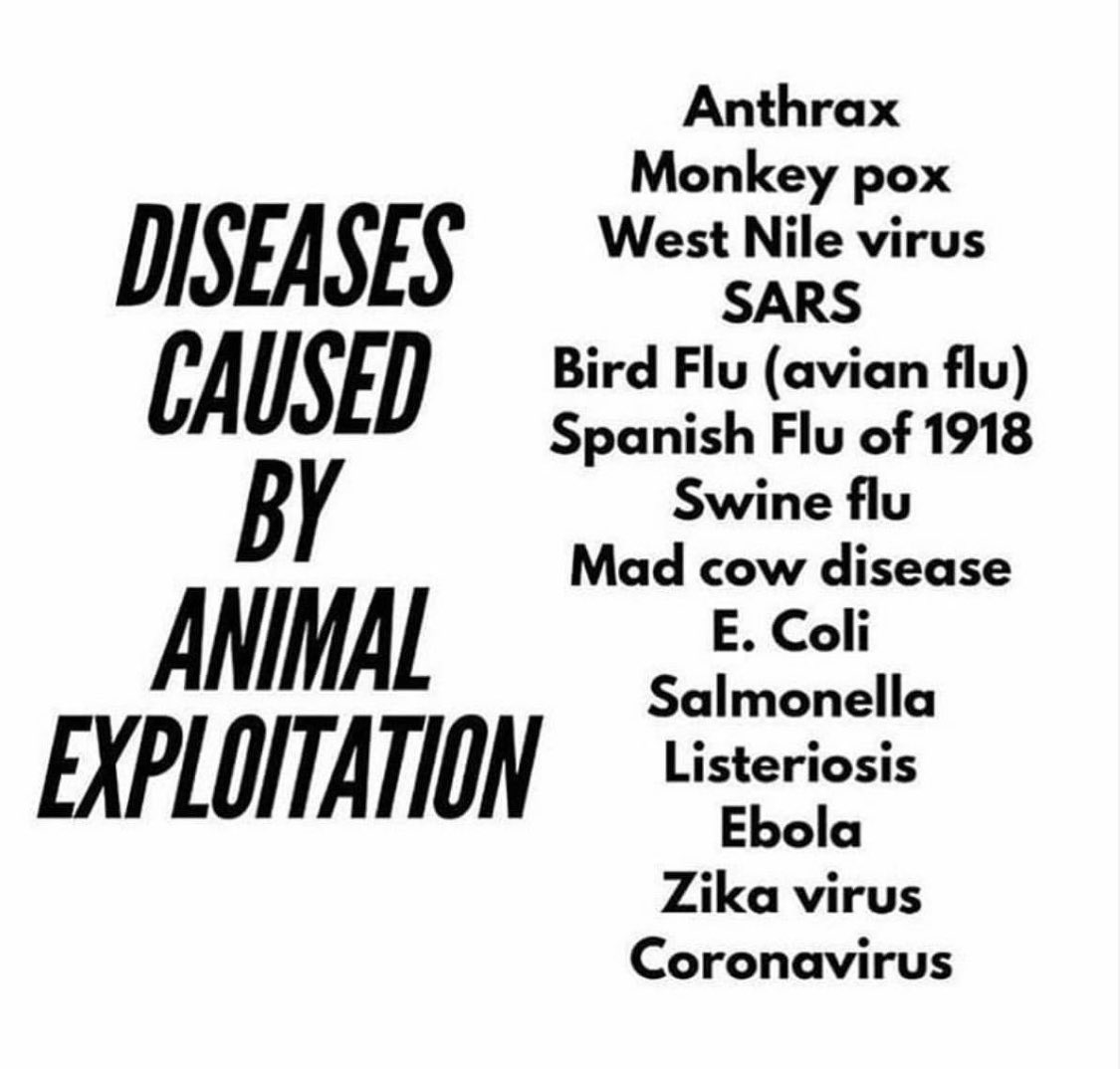 diseases animals